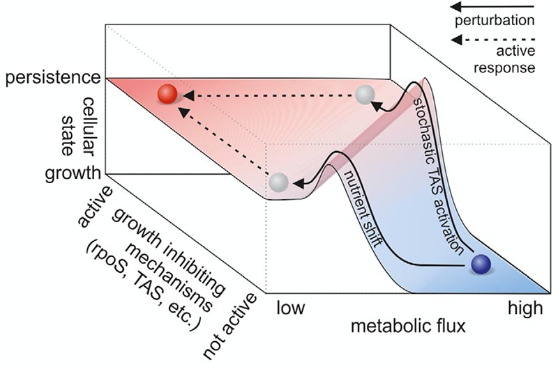 Multi-drug efflux pumps can export antibiotics and provide transient resistance, but we found that their expression predisposes cells towards mutation (El Meouche, Dunlop - Science 2018).